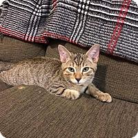 Adopt A Pet :: Cayman - Columbus, OH