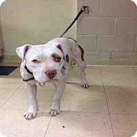 Adopt A Pet :: A1751183 - San Diego, CA
