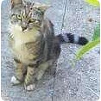Adopt A Pet :: Felicity - New York, NY