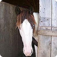 Adopt A Pet :: Clover - Lyles, TN