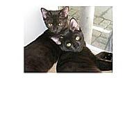 Adopt A Pet :: Foxy - Brooklyn, NY