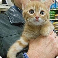 Adopt A Pet :: Evan - Reston, VA