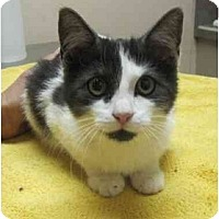 Adopt A Pet :: Tessa - Bayonne, NJ