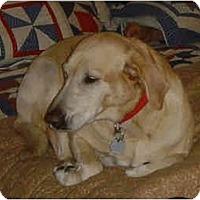 Adopt A Pet :: Tillie - Kingwood, TX