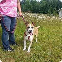 Adopt A Pet :: Calvin - Shelton, WA
