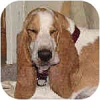 Adopt A Pet :: General - Phoenix, AZ