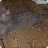 Adopt A Pet :: Pi - Cocoa, FL