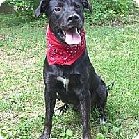 Adopt A Pet :: Dooley - Mocksville, NC