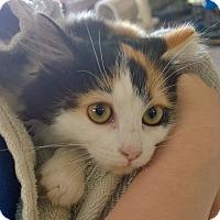 Adopt A Pet :: Candace - Island Park, NY
