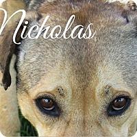 Adopt A Pet :: Nicholas - Scottsdale, AZ