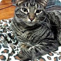 Adopt A Pet :: ZEN - Ridgewood, NY