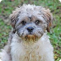 Adopt A Pet :: ISAAC - Los Angeles, CA