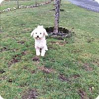 Adopt A Pet :: Alley - Surrey, BC