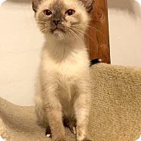 Adopt A Pet :: Nacho - Addison, IL