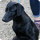 Adopt A Pet :: Lance