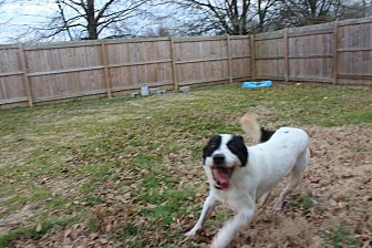 Shepherd (Unknown Type) Mix Dog for adoption in Jackson, Mississippi - Domino
