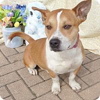Adopt A Pet :: Eduardo - West Chicago, IL