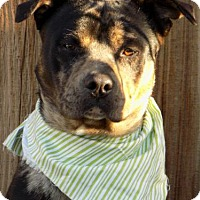 Adopt A Pet :: Troy-ADOPTED 4/2/16! - Apple Valley, CA