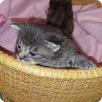 Adopt A Pet :: Felicita - Stanford, CA