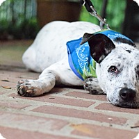 Adopt A Pet :: Tipper - Baton Rouge, LA