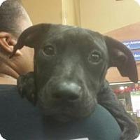 Adopt A Pet :: Melinda - Pembroke, GA