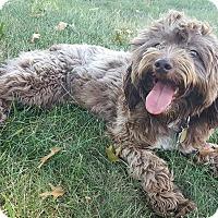 Adopt A Pet :: Iris - New Oxford, PA