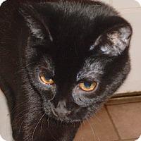 Adopt A Pet :: Salem - Buhl, ID