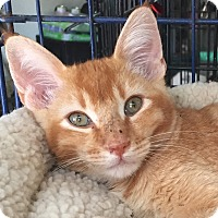 Adopt A Pet :: Milo - McKinney, TX