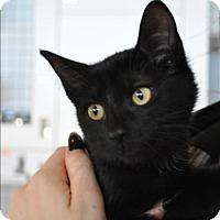 Adopt A Pet :: Riku - Hyde Park, NY