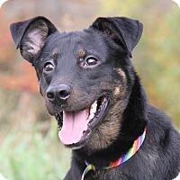 Adopt A Pet :: Paco - Marietta, OH