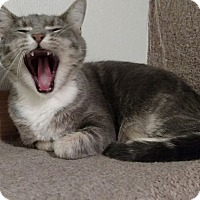 Adopt A Pet :: Doris - Hanna City, IL