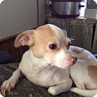 Adopt A Pet :: Prissy meet me 12/16 - Manchester, CT