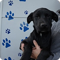 Adopt A Pet :: Isabelle - Oviedo, FL