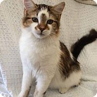 Adopt A Pet :: Sophie - Havana, FL