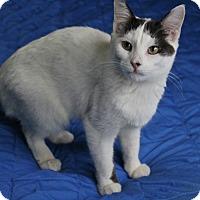 Adopt A Pet :: Tiara - Ocean Springs, MS