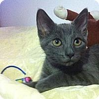 Adopt A Pet :: London (FIV) - Richmond Hill, ON