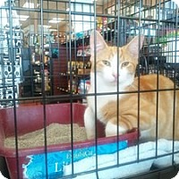 Adopt A Pet :: Murphy - Berkeley Hts, NJ