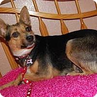 Adopt A Pet :: Panzi - URGENT FOSTER NEEDED - Seattle, WA