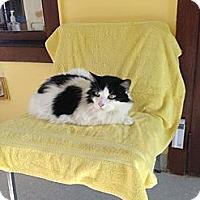 Adopt A Pet :: Panda - Lancaster, MA