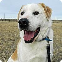 Adopt A Pet :: Snoopy - Cheyenne, WY