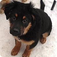Adopt A Pet :: Harmony - Saskatoon, SK
