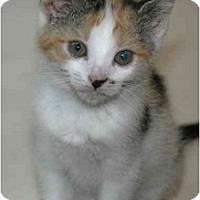 Adopt A Pet :: Monroe - Arlington, VA