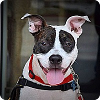 Adopt A Pet :: Chance - Naples, FL