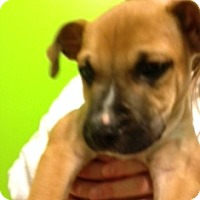 Adopt A Pet :: Woody Woods-Adopted! - Turnersville, NJ