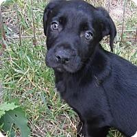 Adopt A Pet :: Peso - Middletown, RI