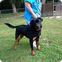 Adopt A Pet :: Lennox - Sandston, VA