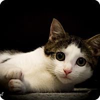Adopt A Pet :: Mikayla - Stafford, VA