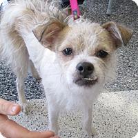 Adopt A Pet :: Sadie - Humble, TX