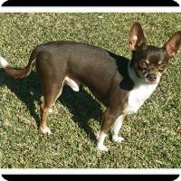 Adopt A Pet :: PRESLEY - Winchester, CA