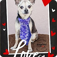 Adopt A Pet :: Hector - Shawnee Mission, KS